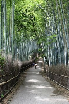Day 11: Stroll through the famous bamboo forest of western Kyoto's Arashiyama district www.boutiquejapan.com