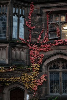 Ivy growing on the walls of stone...gothic mullioned windows. My kinda place.