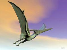 Pteranodon Dinosaur Flying - Render by Elenarts - Elena Duvernay Digital Art Sunset Sky, Prehistoric, Fine Art America, Whale, Digital Art, Statue, Canvas, Prints, Poster
