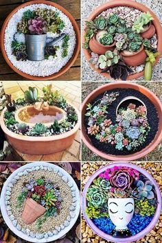 Selecting Plants for Container Gardening Occasionally, landscaping your home can be difficult, but most of the time it appears harder than it actually is. Succulent Landscaping, Succulent Gardening, Container Gardening Vegetables, Succulents In Containers, Succulent Terrarium, Cacti And Succulents, Planting Succulents, Succulent Arrangements, Vertical Succulent Gardens