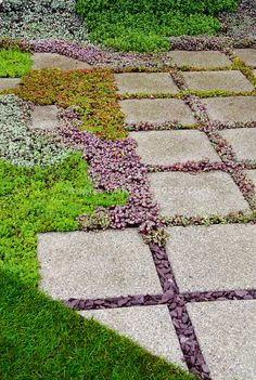 Sedum succulent plants between stone stepping stones in garden path  with  lawn  groundcover plants10 Cheap but creative ideas for your garden 10   Plants and Gardens. Garden Paths And Stepping Stones. Home Design Ideas
