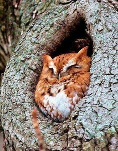 Cute owl--I like the orangey brown color!