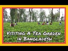 Stopping by A Tea Garden  | Jaflong, Sylhet, Bangladesh | 11D17 Day 16E