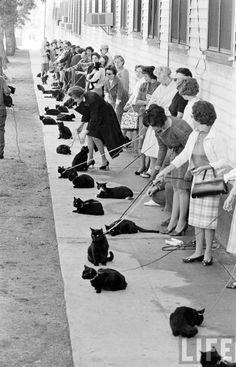 """Women From The 50's With Nothing To Do Spend 25 Years Training Cats To """"Down, Stay,"""" For Local Photo Shoot."""