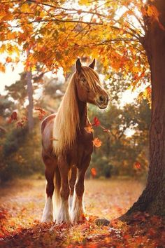 Gorgeous horse under an autumn red tree.