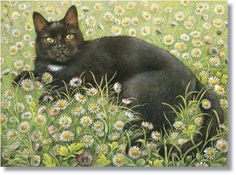 I ❤ kitties . . . Gabrielle in the Daisies ~Lesley Anne Ivory Cat