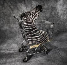 El horror del contrabando de fauna salvaje por Britta Jaschinsk
