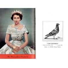 Did you know? The Queen is a Patron of pigeon racing in the UK