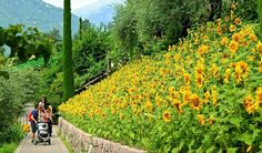 I Giardini di Castel Trauttmansdorff - Percorso Giardini del sole     #TuscanyAgriturismoGiratola