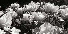 Cuadro Flowers Up II
