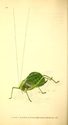 Katydid.v.4 (1826) - The Naturalist's repository, or, Monthly miscellany of…