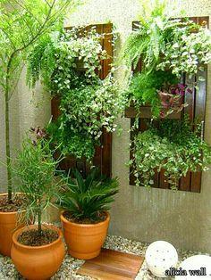 falra növények