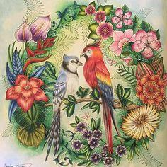 Que perfeição!!!!! ♥♥♥ @Regrann from @bragasacha - #Aquarela #polychromos #selvamagica #coloriage #lostocean #magicaljungle #enchantedforest #secretgarden #tropical #magicaljungle #johannabasford #colorpencil #fabercastellpolychromos #polychromos #coloringbook #coloring #artecomoterapia #Regrann