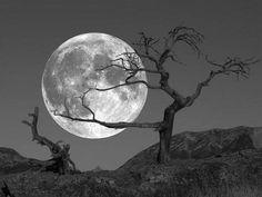 """il-vaso-di-pandora-blog: """" La luna geme sui fondali del mare, o Dio quanta morta paura di queste siepi terrene, o quanti sguardi attoniti che salgono dal buio a ghermirti nell'anima ferita. La luna grava su tutto il nostro io e anche quando sei..."""