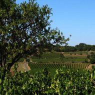 Mas Gabriel - Languedoc - Trois Terrasses