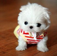 18 Best Cute White Puppies Images Cute Baby Dogs Cute Puppies