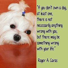 Maltese Dogs Quotes so true, cute and funny! The dog quotes to make you smil Dogs Quotes so true, cute and funny! The dog quotes to make you smile Dog Quotes, Animal Quotes, Labrador Quotes, Cute Puppies, Dogs And Puppies, Puppy Stages, Shih Tzu Puppy, Shih Tzus, Funny Signs