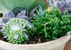 Common Types Of Succulents