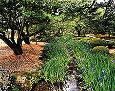 Lucky to sight any bass !   I  Irises flank stream in Kenroku-en garden, Kanazawa. Like haiku & ikebana, Jap gardens celebrate the seasons