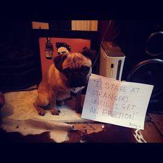 Pug shame - Bisley's failed dog-shaming submission