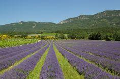 Les routes de la lavande de la Drôme traversent la Diois, la Drôme provençale pour découvrir des paysages aux différentes nuances de bleu !