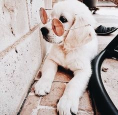 Gifts For Dog Lovers Gifts For Dog Lovers :) for Cute dogs and puppies Cute Baby Dogs, Cute Dogs And Puppies, I Love Dogs, Doggies, Adorable Dogs, Animals And Pets, Funny Animals, Cute Little Animals, Cute Creatures