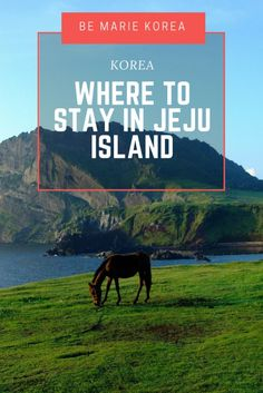 Jeju Island in South Korea is huge, so finding the right hotel can be a little overwhelming. Read this guide on where to stay in Jeju Island! South Korea Travel, Asia Travel, Best Places To Travel, Cool Places To Visit, Animal Experiences, Jeju Island, Beautiful Places In The World, Travel Inspiration, Travel Ideas