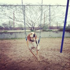 this is a blog called maddie the coonhound. a very patient dog. the world is very strange and wonderful these days.