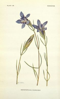 Addisonia : colored illustrations and popular descriptions of plants.