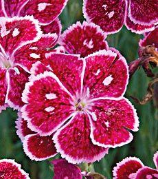 Native utah flower utah nature pinterest utah and flower mightylinksfo