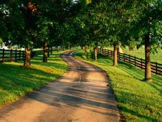 I've always wished for a tree lined driveway leading up to my house. I love the pasture fencing on either side.