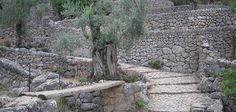 Haz la ruta de piedra en seco en Banyalbufar (Mallorca)
