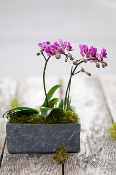 I love this look, very modern - eco - zen. Natural container with live orchids and moss.