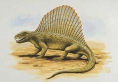 BioOrbis: Conheçam o Dimetrodon