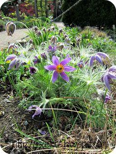 Lisas Hus: Blomstervandring