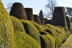 Packwood House National Trust, Topiary, Cactus Plants, House, Inspiration, Biblical Inspiration, Home, Topiaries, Cactus