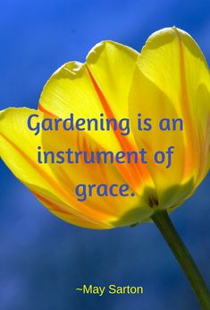 Organic Gardening For Dummies Gardening For Dummies, Inspirational Quotes For Kids, Garden Quotes, Garden Inspiration, Organic Gardening, Inspire Me, Homesteading, Passion, Learning
