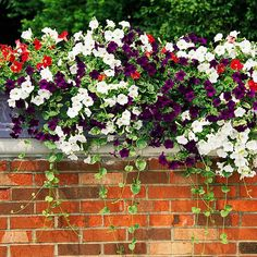 Add a Planter Box     Planter boxes are a timeless, classic accessory. Whether wrought iron or barn wood, they're a charming patio accent -- and they're a great way to showcase your favorite small plants. Colorful new annuals come onto the market every year, so the design possibilities are endless