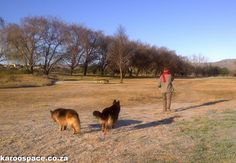 The Cradock golf course is just like Hyde Park in London - through the winter lens. Hyde Park, Golf Courses, Lens, London, Winter, Winter Time, Lentils, London England
