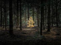 写真家エリー・デイビース氏の発想の源は森の中にある。そこは、可能性が無限に広がっていた子ども時代へ戻ることができる世界12点