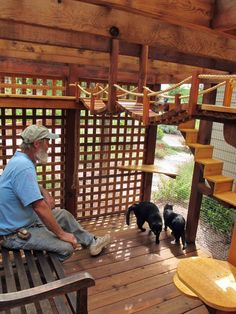 Cat enclosure for Billy and Oscar with designer, Chuck. #cats #catio