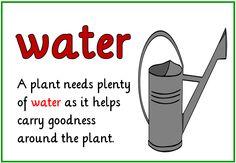 how plants grow ks2 - Google Search