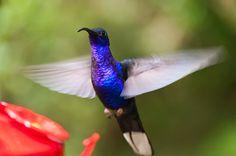 Monteverde hummingbirds