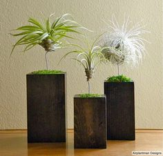 Airplantbox by Josh Rosen  www.airplantman.com  www.facebook.com/Airplantman