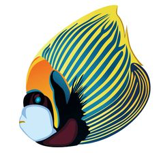 dibujos de peces en color - Buscar con Google