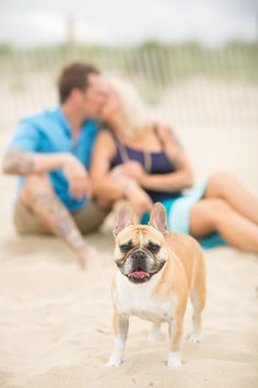 French bulldogs, frenchies, dogs at engagement sessions, engagement sessions with dogs, beach engagement sessions, engagement poses | Jen + Ashley Photography