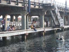 Fishing off Old Mandurah Bridge