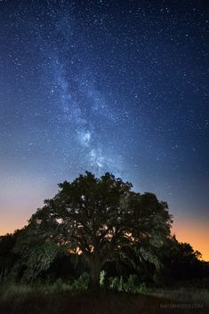 """The Milky Way shines over """"Grandma's Oak"""" on the Purgatory Trails in San Marcos, TX."""