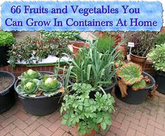 66 Fruits and Vegetables You Can Grow In Containers At Home Continue reading » http://www.livinggreenandfrugally.com/66-fruits-vegetables-can-grow-containers-home/