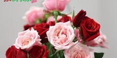 Lovely Good Morning Images Free Download